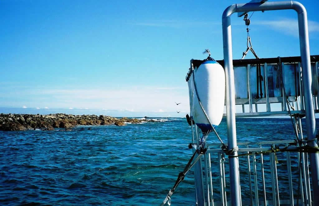 Shark Diving cage at Dyer Island, South Africa
