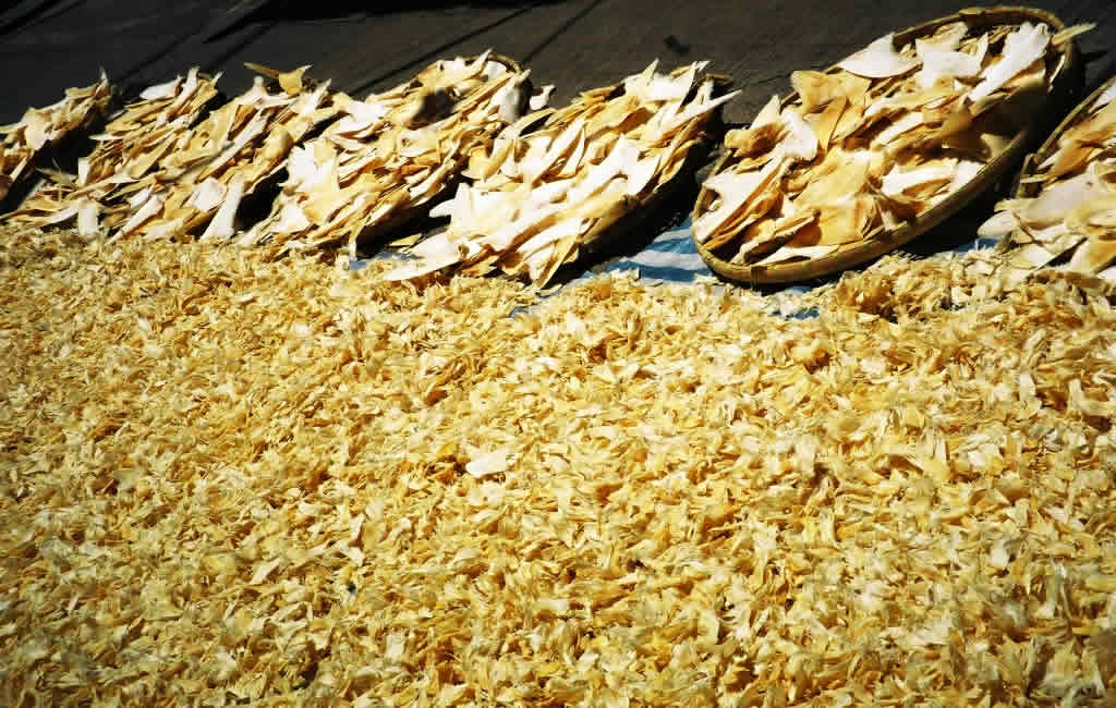 Shark fins dry in the sun on a Hong Kong street