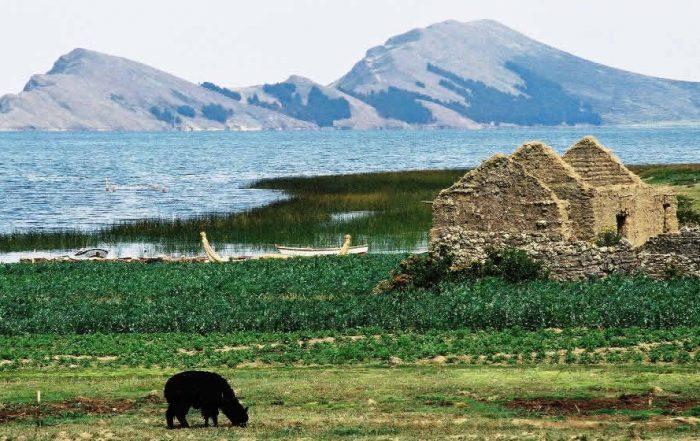 Lake Titicaca in Bolivia with Isla del Sol, reed canoe, farmhouse ruins and alpaca grazing