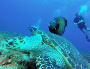 Scuba diving with turtle and angelfish near Cozumel, Mexico